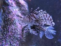 Plongez dans les grands fonds marins et découvrez les espèces extraordinaire qui les peuplent à l'Aquarium de Biarritz. @Chloee Servant. Photo non libre de droit